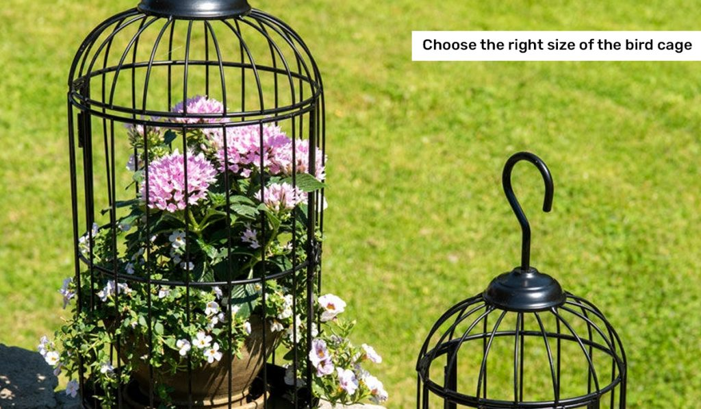 Choose the right size of the bird cage